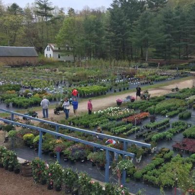 About Us Black Forest Nursery